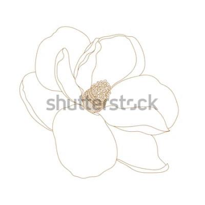 Väggdekor Magnoliablomma, ovanifrån, isolerad på vit. Grafiska handritade magnoliablommor. Vector.Magnolia blommateckning och skiss med svartvit linjekonst.