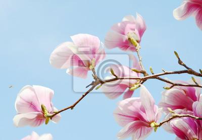 Väggdekor magnoliaträd blommar