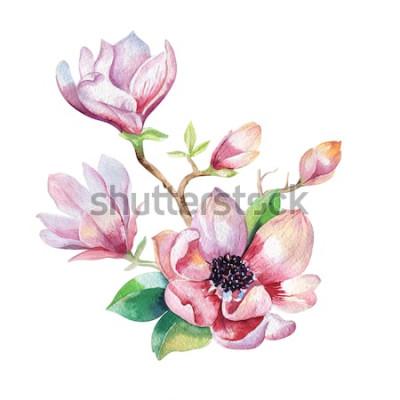 Väggdekor Måla Magnolia blommatapet. Handritad blommig akvarellillustration. Blomma dekorativa naturliga element. Vattenfärgbakgrund för vintagekonst.