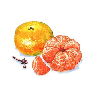 Väggdekor mandarin eller mandarin frukt isolerade på vit bakgrund