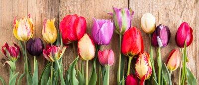 Väggdekor mångfärgade tulpaner på en träbakgrund, banderoll, gamla brädor, vårblommor, tulpaner på brädorna