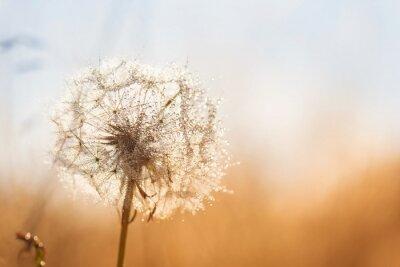 Väggdekor maskros blomma