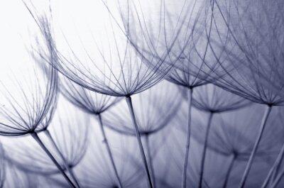 Väggdekor maskros frön