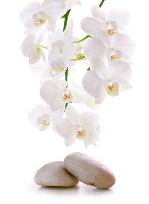 Väggdekor Massage Stenar med Orchid.