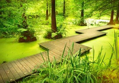 Väggdekor Modern gångväg eller landgången över en damm i skogen. Gamla träd står i en myr eller träsk i skogen. Solstråle och smidig ljus som faller genom trädtopparna.