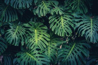 Väggdekor Monstera Philodendron löv - tropisk skogsbruk