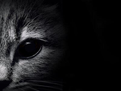 Väggdekor mörk mynnings katt närbild. frontvy