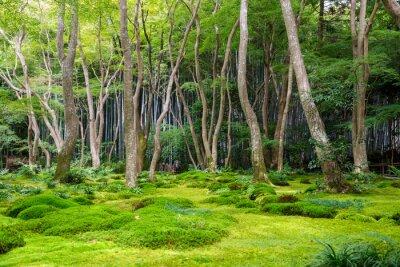 Väggdekor Moss utsikt över trädgården i Arashiyama, Kyoto
