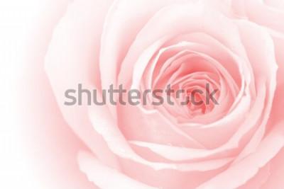 Väggdekor närbild färgglada rosenblad för bakgrund
