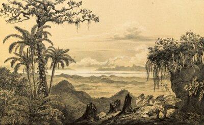 Väggdekor Naturen i Sydamerika.