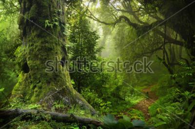 Väggdekor Nepal jungle