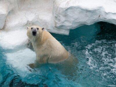Väggdekor Northern isbjörn