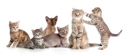 Väggdekor olika katter grupp isolerade