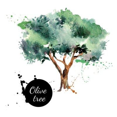 Väggdekor Olivträd vektor illustration. Handritad akvarellmålning