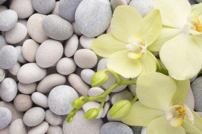Väggdekor Orkide.
