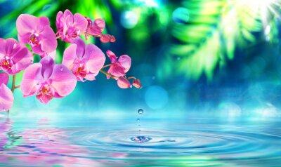 Väggdekor orkidé i zen garden med dropp på damm