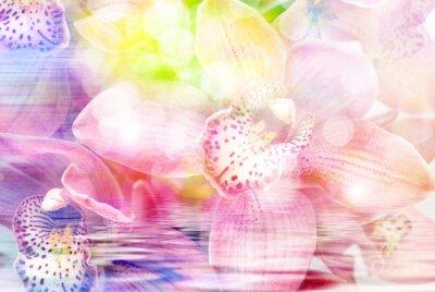 Väggdekor Orkidé närbild
