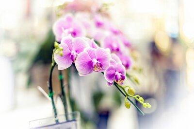 Väggdekor orkidéer