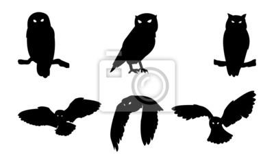 Väggdekor Owl fågelsilhouette