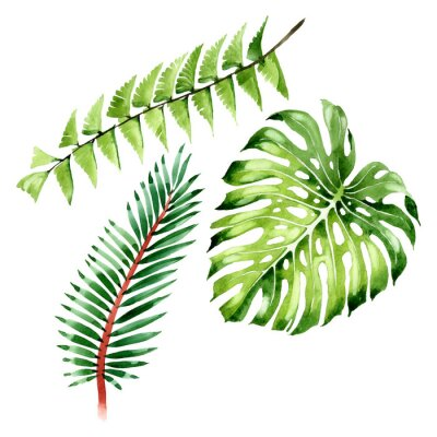 Väggdekor Palm beach tree leaves jungle botanical. Watercolor background illustration set. Isolated leaf illustration element.
