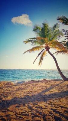 Väggdekor Palm på en tropisk ö