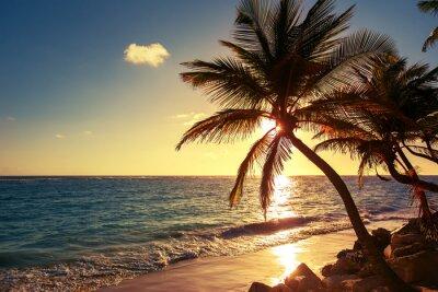 Väggdekor Palm på tropisk strand