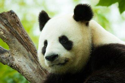 Väggdekor Panda asleep