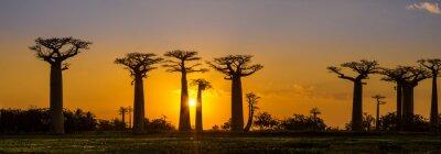 Väggdekor Panoramautsikt vid solnedgången över Baobab avenue