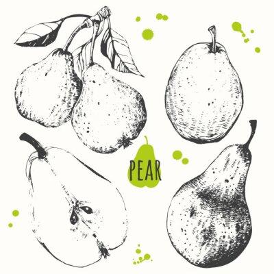 Väggdekor Päron. Uppsättning av handritad päron. Färska ekologiska livsmedel.