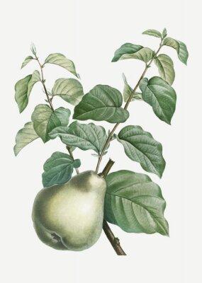 Väggdekor Pear on a branch