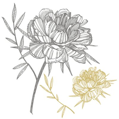 Väggdekor Peony flower and leaves drawing. Hand drawn engraved floral set. Botanical illustrations. Great for tattoo, invitations, greeting cards
