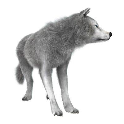 Väggdekor Polar Wolf på vit