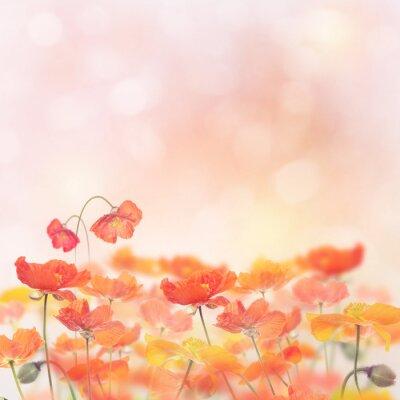 Väggdekor Poppy Flowers Blossom
