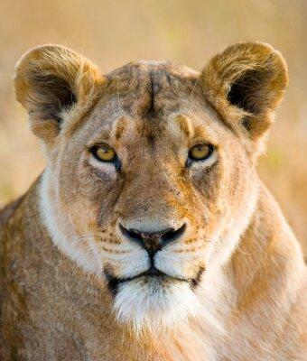 Väggdekor Porträtt av en lejoninna. Närbild. Kenya. Tanzania. Maasai Mara. Serengeti. En utmärkt illustration.