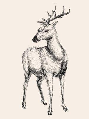 Väggdekor Rådjur vektor illustration, räcka utdraget, skissa