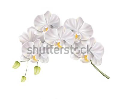 Väggdekor Realistisk vit orkidéblommagren med knoppar på stammen. Elegant bröllopsinbjudan, design för spa-salongdekoration. Vector inbjudningskort för vektor, romantisk händelseelement. Vår, blommor för sommar