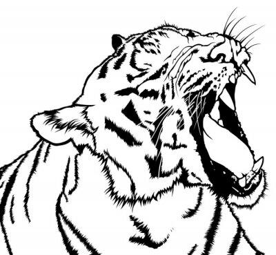 Väggdekor Roaring Tiger - Svartvitt Teckning Illustration, Vector