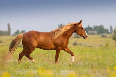 Väggdekor Röd häst med långa manen