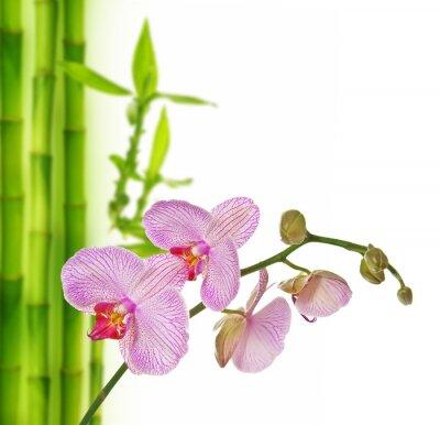 Väggdekor rosa orkidé och bambu - spa bakgrund