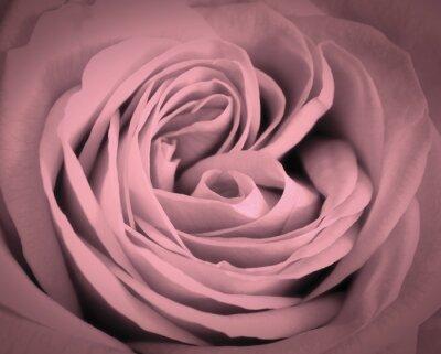 Väggdekor Rosa ros närbild bakgrund. Romantisk kärlek hälsningskort