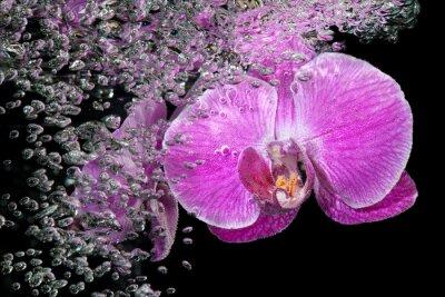 Väggdekor Rosa tropisk orkidé under vatten