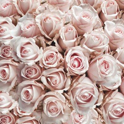 Väggdekor Rosa vintagero