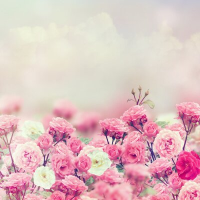 Väggdekor Rose Blommor