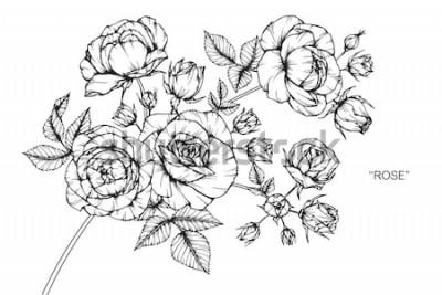 Väggdekor Rose blommor ritning och skiss med linje-konst på vita bakgrunder.