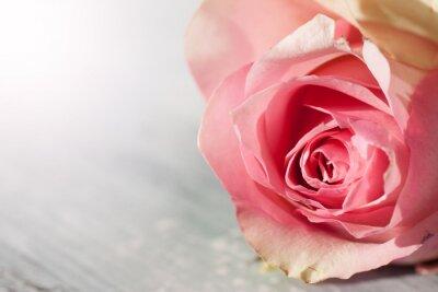 Väggdekor Roses Stilleben