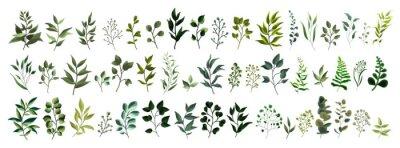 Väggdekor Samling av tropiska blad för grönska bladväxt