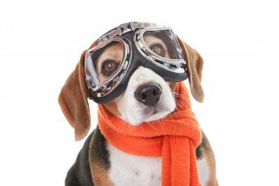 Väggdekor semester husdjur koncept, hund i flygande glas