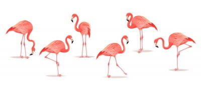 Väggdekor Set of exotic flamingos isolated on white background. Hand drawn watercolor illustration.