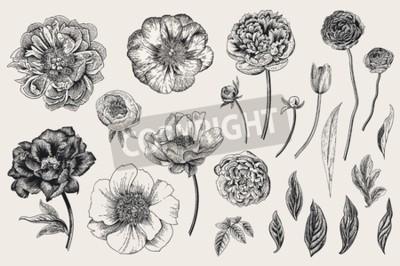Väggdekor Set of Spring flowers. Vintage vector botanical illustration. Black and white