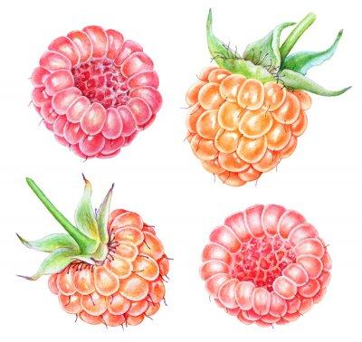 Väggdekor Set of watercolor raspberries on white background